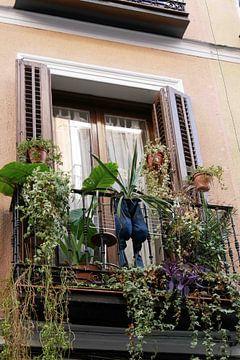 Madrid - (Tuin) Broek van Wout van den Berg