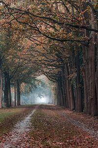 Liesbos , het pad
