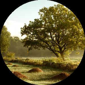 Brabants natuurgebied natuurbeheer van Andy Van Tilborg