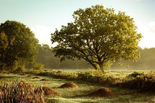 Brabants natuurgebied natuurbeheer von Andy Van Tilborg