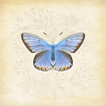 Icarusblauwtje Vintage
