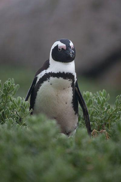 Pinguin van Catching Moments