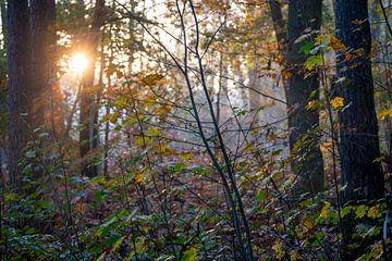 Nebliger Morgen im sonnigen Herbstwald von Utrecht, Utrechtse Heuvelrug bei Zeist von John Ozguc
