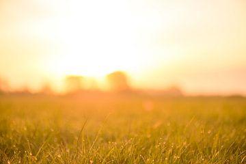 Zonsopgang over een veld met dauw op het gras tijdens deze vroege ochtend in het voorjaar van Sjoerd van der Wal
