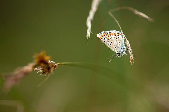 Vlinder op een wazige achtergrond