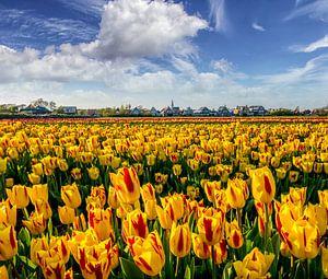 Tulpen Den Hoorn Texel von