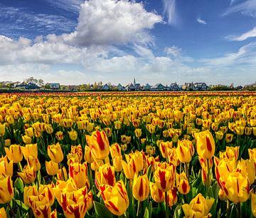 Tulpen Den Hoorn Texel von Texel360Fotografie Richard Heerschap