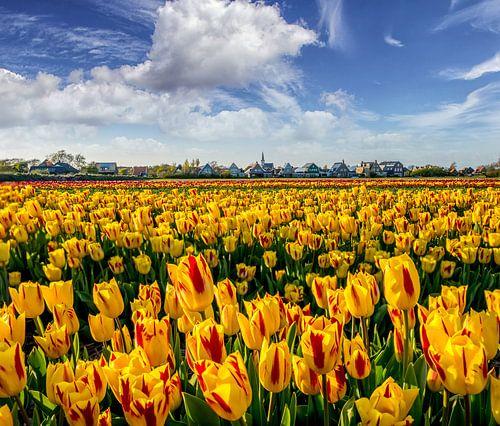 Tulpen Den Hoorn Texel van