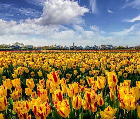 Tulpen Den Hoorn Texel van Texel360Fotografie Richard Heerschap