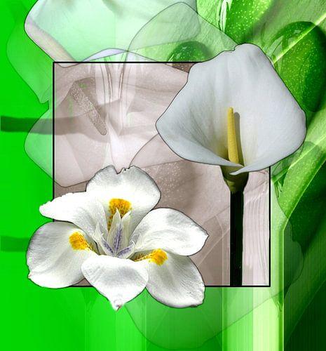 Florales in weiß