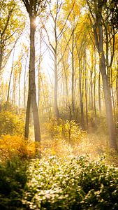 herfst in het bos van