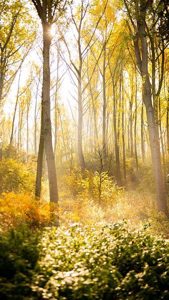 herfst in het bos van Dirk Vervoort