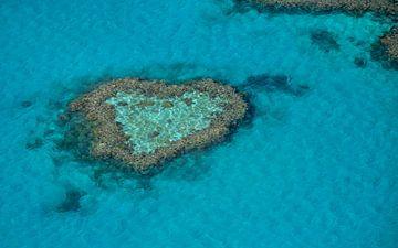 Heart Reef von Victor Droogh