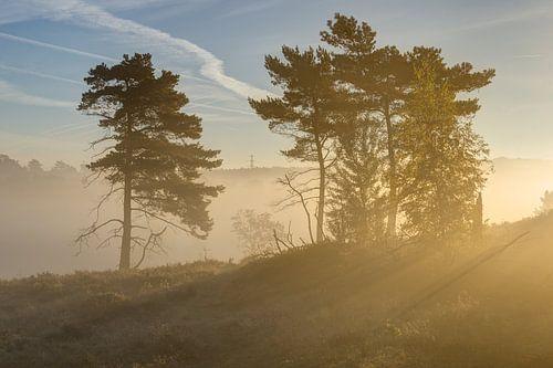 zonnestralen op een mistig heidepad van Francois Debets
