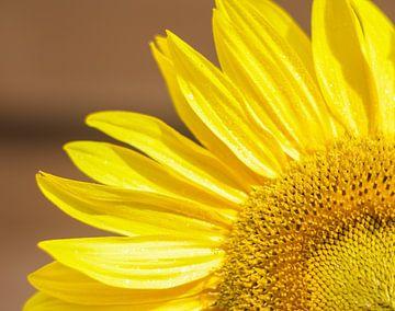 Sonnenblume von Talitha Blok