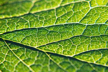 Groene zuurstofdonor van Florian Kunde