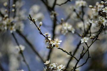 fleur blanche sur Tania Perneel
