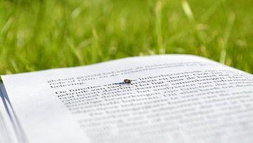 Fliege lesen von Greta Lipman