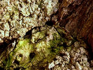 Geheimnisvolle Welt der Bäume (4)