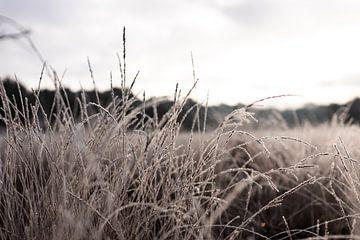 Natuur in de winter van Christien Hoekstra