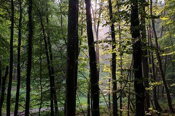 Zonnestralen door de bomen von Timo van Beelen
