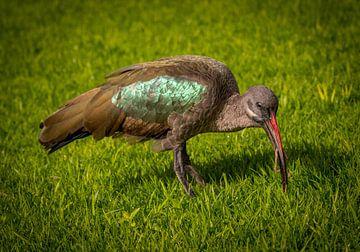Vogel von Anita van Gendt