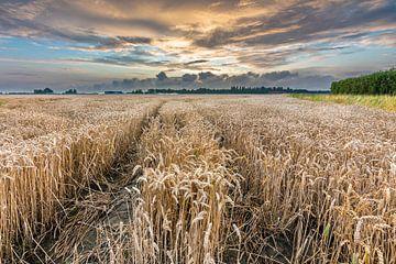 Mooie wolkenlucht boven tarweveld van Jan Poppe