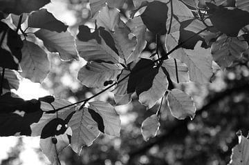 Bladeren van Alice Sies