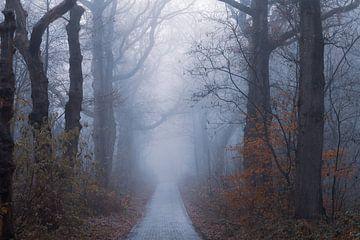 koude sfeer in het bos van Tania Perneel