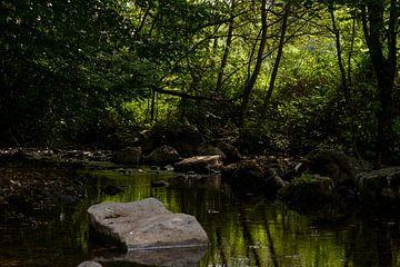 Beekje door het bos van Michelle Van Den Berg