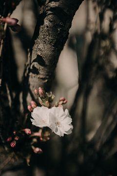 Blume zu Baum von Sanne van Pinxten