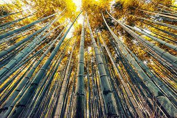 Bambus in Japan von Manjik Pictures