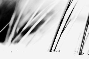 L'herbe du casque dans les dunes de l'homme écossais sur Henriëtte van Golde