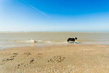 Twee honden aan de vloedlijn van Tony Buijse