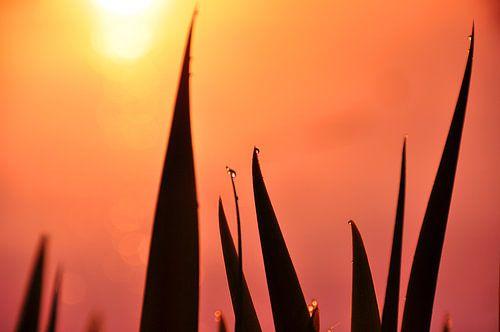 Gras in de opkomende zon van
