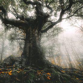 De heksenboom van Bladel van Joris Pannemans - Loris Photography