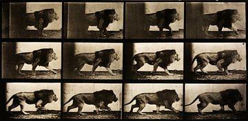 Leeuw wandelt stap voor stap van Atelier Liesjes
