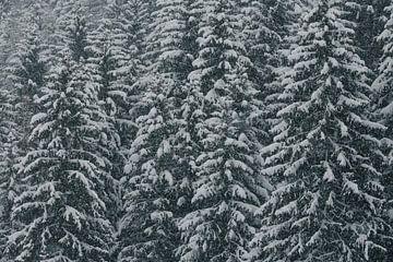 Winter in het bos van Sophia Eerden