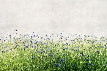Blütentanz - Flowerdance von meinFarbentanz