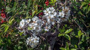 Bloemen en bessen B