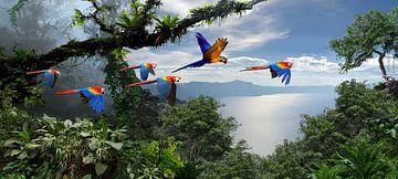 Aras au dessus de la forêt tropicale sur Paulus Geeve