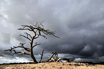 Regen op komst von Paul Arentsen