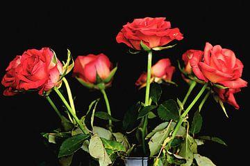 Bosje rode rozen van Fotografie Jeronimo