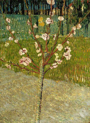Vincent van Gogh. Amandelboom in bloesem van