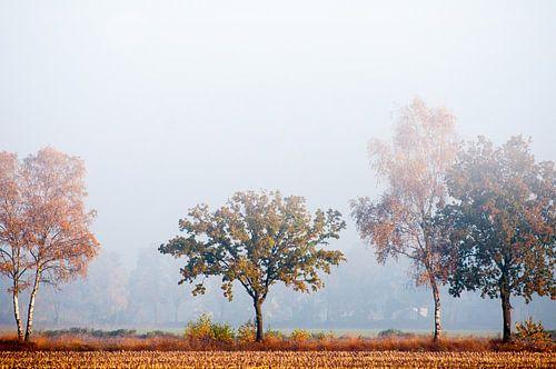 Fog in the morning von Hetty van der Zanden