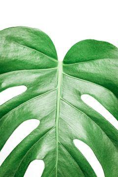 monstera deliciosa | Gatenplant van Sarina Dekker