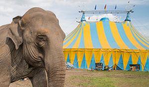 olifant staat bij het circus