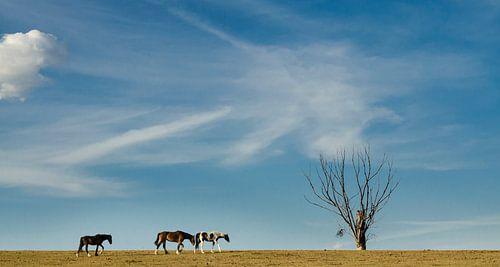 De boom en de drie paarden