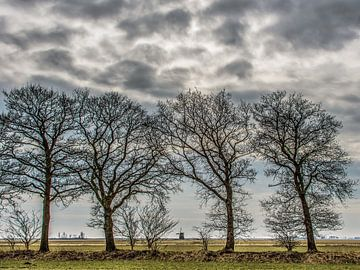 Landschap Gaasterland, Friesland, met bomenrij en windmolen van