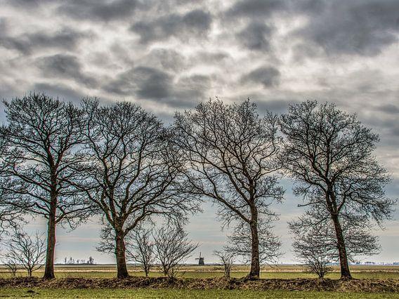 Landschap Gaasterland, Friesland, met bomenrij en windmolen